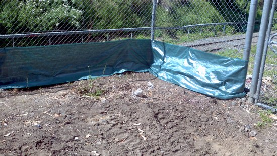 Council is also going to help us in the weeks ahead by planting a garden along the back fence to screen the train line.